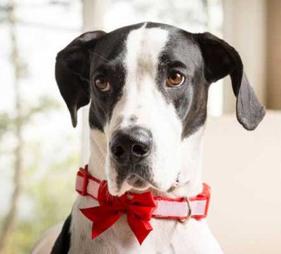 Sai scegliere il collare più adatto per il tuo cane Fido? Ecco alcuni consigli degli esperti